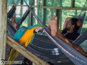 Pierwsze spotkanie z dżunglą amazońską